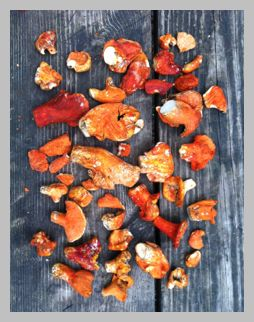 Foraging & Cooking Lobster Mushrooms From One tomato, two tomato.