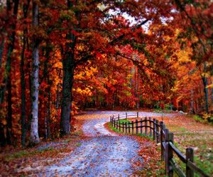 Fall leaves & path to walk