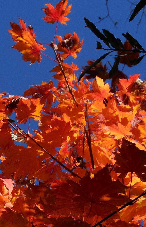 Autumn in Canberra, Australia. (Sonya Heaney)