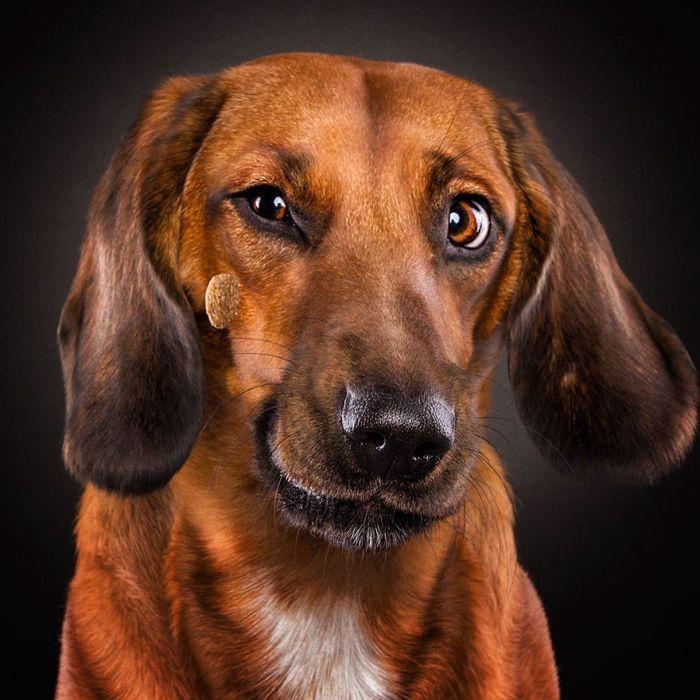 Картинки, собака фото смешное