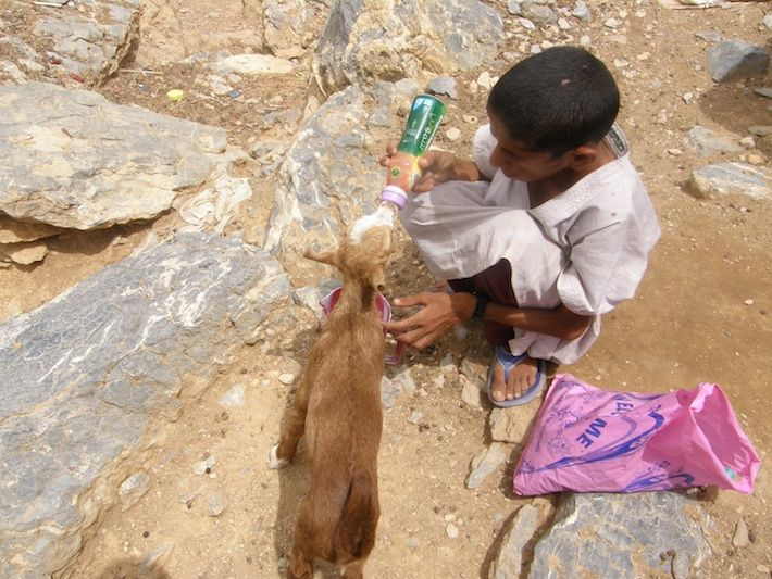 MOTHERLY INSTINCTS in #OMAN