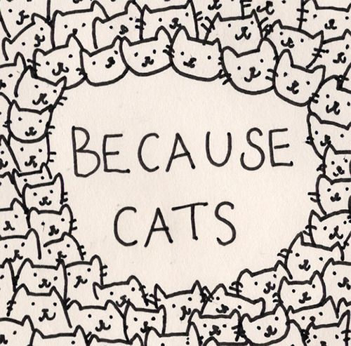 BECAUSE CATS <3