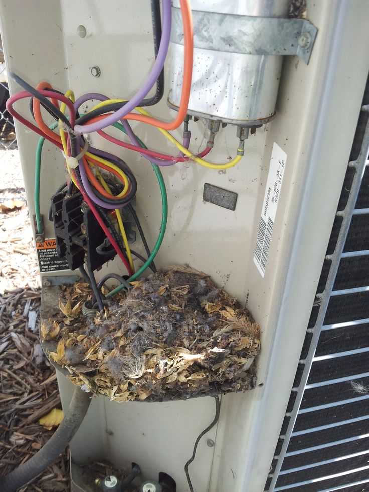 rodent nest in condenser control panel  upon removal  the