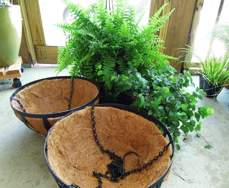 planting fern hanging baskets for shade
