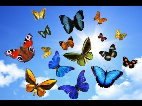 ƸӜƷ Conte/Méditation guidée enfants : les papillons magiques ƸӜƷ - YouTube