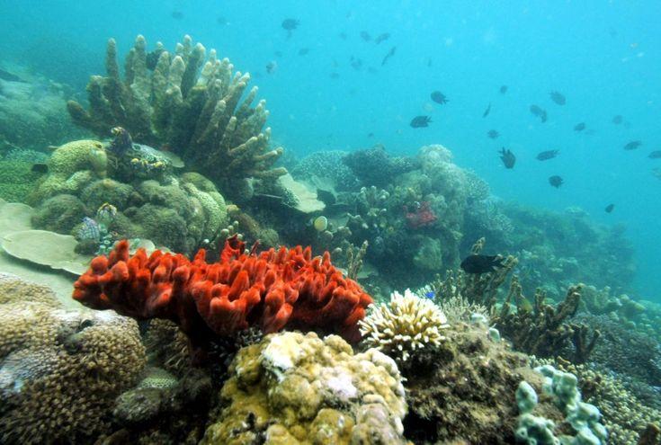 Philippines: un projet de parc à thème sous-marin à Palawan :http://bookingmarkets.net/fr/philippines-un-projet-de-parc-theme-sous-marin-palawan/