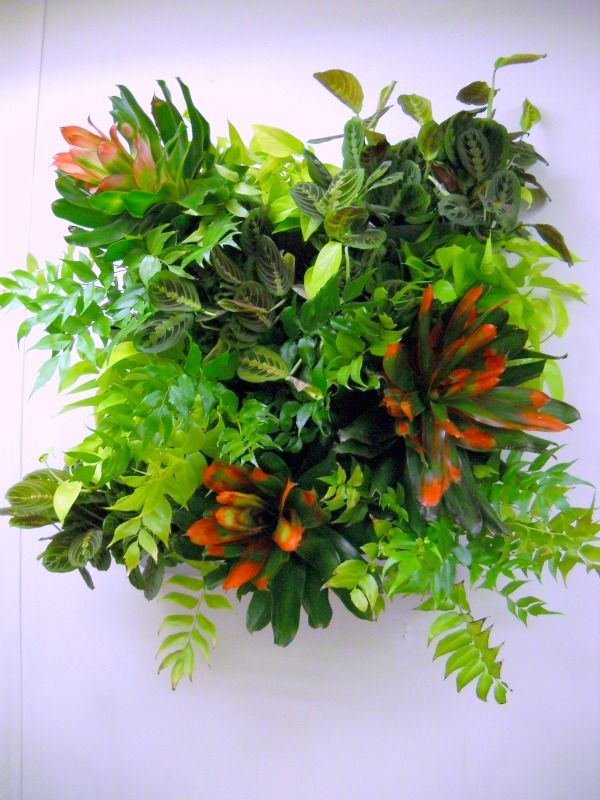 Houseplant combination bromeliads prayer plants pothos for Prayer palm plant