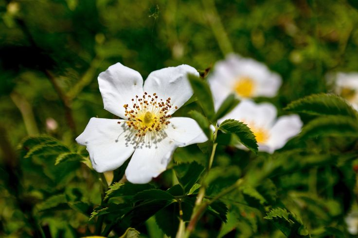https://flic.kr/p/sxF6y6 | Májusi virágok