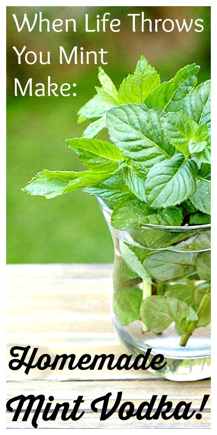 It's ridiculously easy to make your own mint vodka. All you need is some mint, vodka and a little patience. Make now for holiday gifts later in the year!!