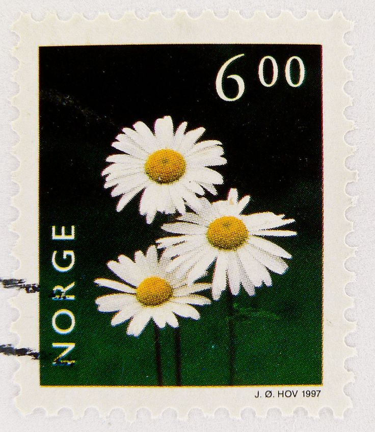 https://flic.kr/p/8FhkGh | beautiful stamp Noreg Norge 6 kr. (Margerite, Chrysanthemum leucanthemum, Margaréta, Jastrun, Prästkragesläktet, フランスギク属, Marguerite, Нивяник, Margriet, 滨菊属) Blumen flowers francobolli bollo Norvegia sello Noruega selos Norway postage 6.00 postes timbre | *** *** *** I'm stampolina and I love to take photos of stamps. Thanks for visiting this pages on flickr.  I'm neither a typical collector of stamps, nor a stamp dealer. I'm only a stamp photograph. I'm fascinated…