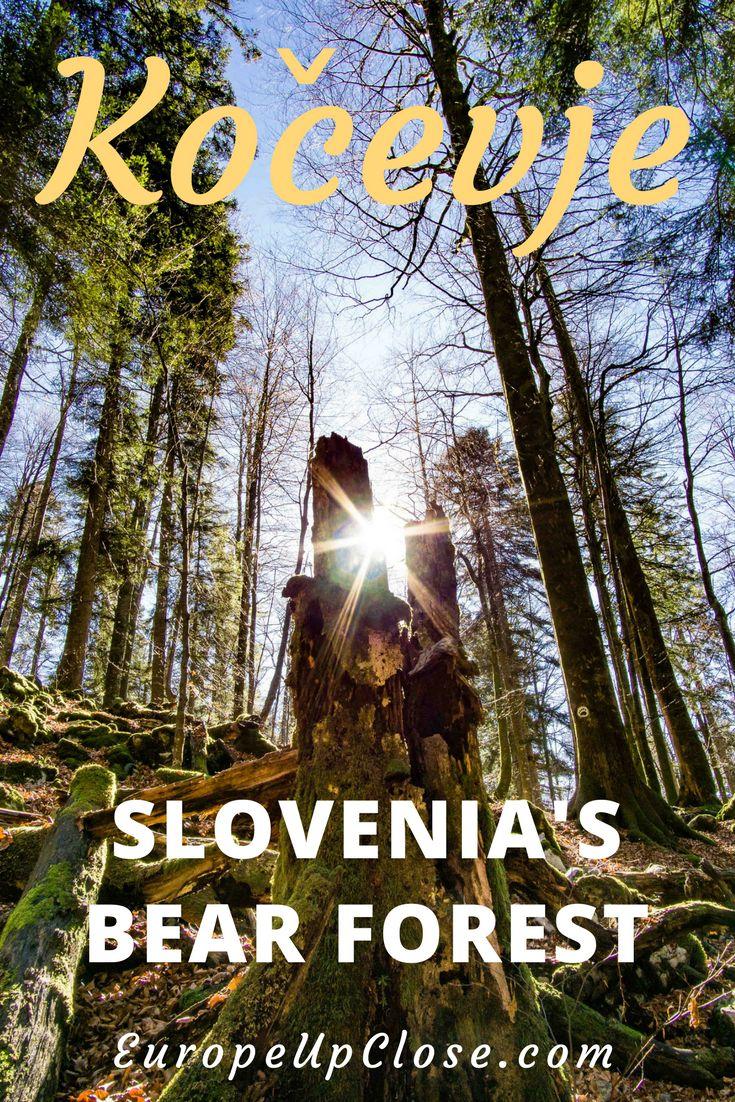 Kočevje - Slovenia's Bear Forest - Virgin Forest in Slovenia - Hiking in Slovenia - Eco Tourism Slovenia