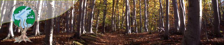 Bosques Sin Fronteras es una organización sin ánimo de lucro cuya finalidad es la protección, conservación y divulgación de los árboles y los bosques del planeta. Para dar forma a estos objetivos, Bosques Sin Fronteras desarrolla diferentes proyectos.