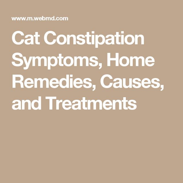 Cat Constipation Symptoms, Home Remedies, Causes, and Treatments