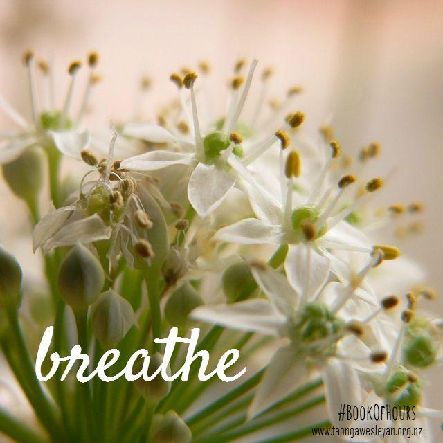 #BookOfHours Series Six - 'words' #breathe http://taongawesleyan.org.nz/galleries/#book-of-hours