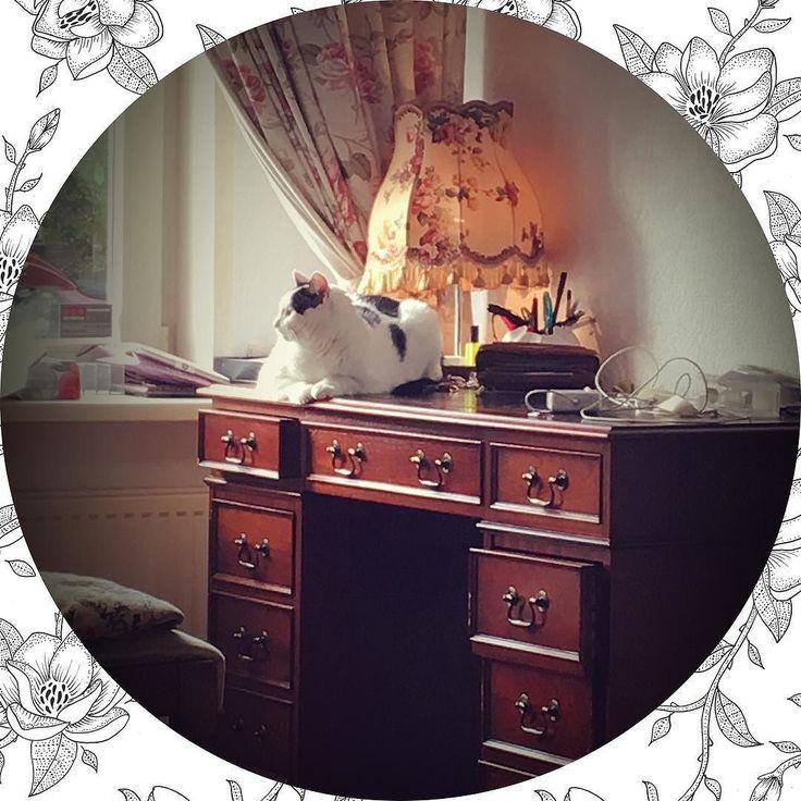 My love  #love #dutch #cat #cats #home #style #cute #cutecats #fashionblog #fashion
