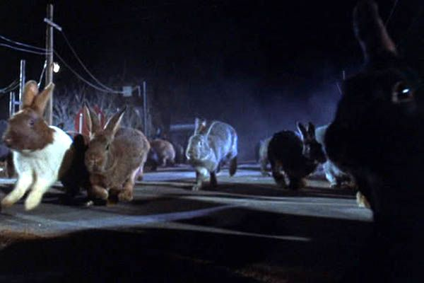 Rabbits_(Night_of_the_Lepus)
