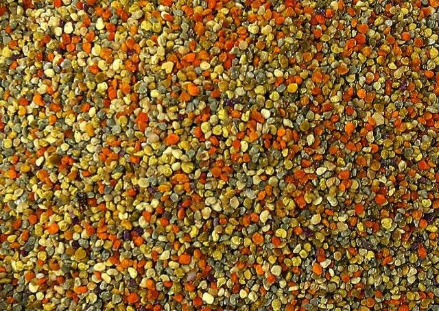 Polline d'ape  È la più grossa fonte di proteine rispetto a qualsiasi altra fonte animale e contiene tutti gli aminoacidi essenziali
