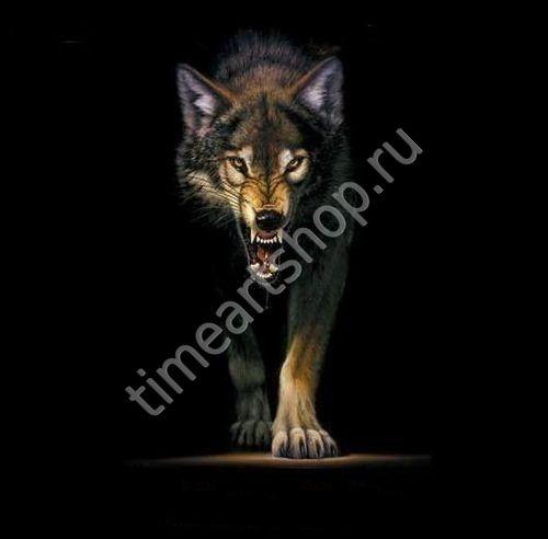 Одинокий волк. Картина раскраска по номерам, размер 40х50см.