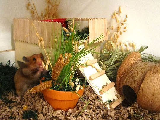 Super Cute! Love the ladder and little loft, the varieties of (hamster safe??) plants, and the little Syrian hammy in the background!