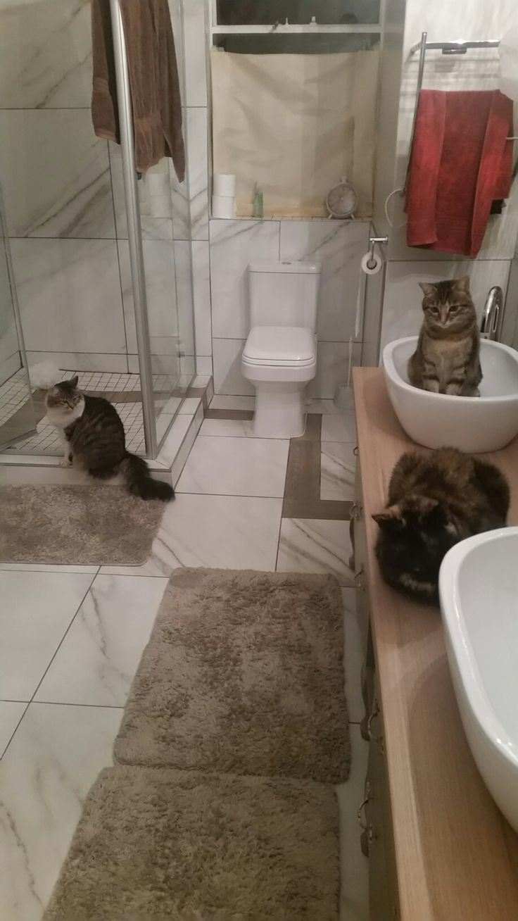 3 musCATeers at the drinking hole.