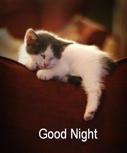 370 best images about goodnight be well on pinterest