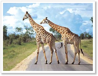 Independent South Africa travel - Go on safari