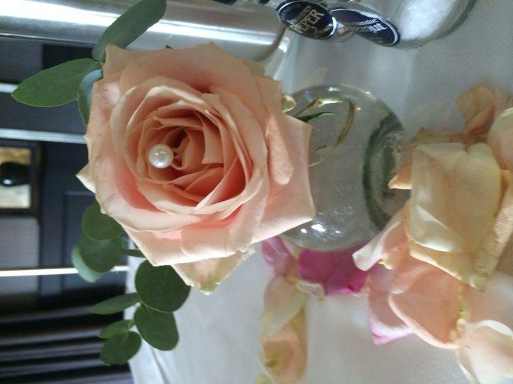 Perzik roos