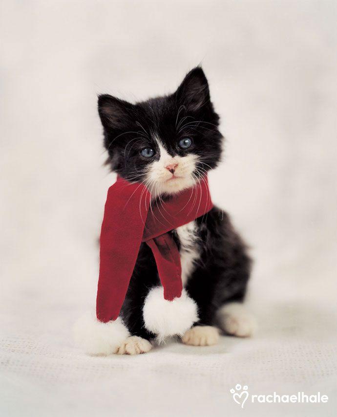 Image detail for -(Cat) – Daily Pet Calendar for November 27, 2012 – Rachael Hale ...
