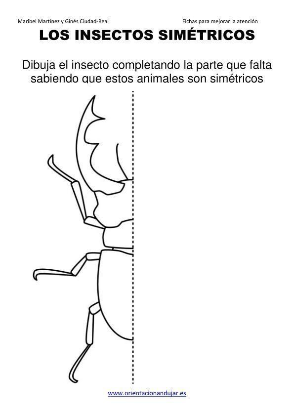 Los Insectos Simetricos Trabajamos Lateralidad Izq Dcha Orientacion Andujar05 4 Insectos Ciencias Naturales Simetria