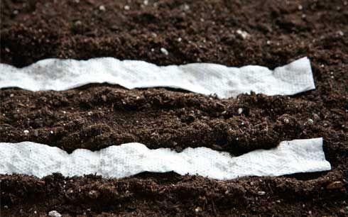 Piantare i semi: distribuiscili così nell'orto