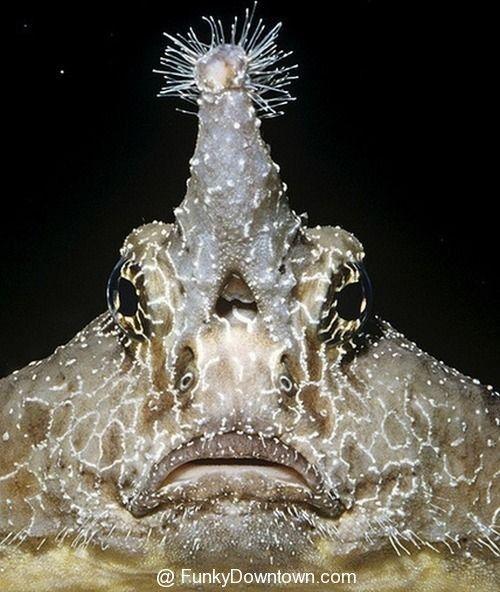 rare deep sea creatures - Google Search
