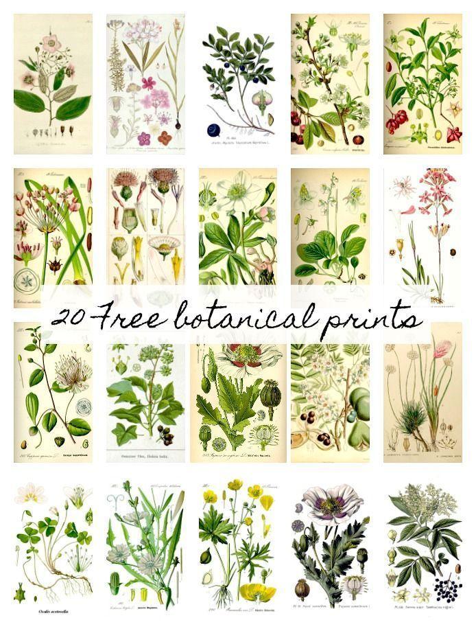 20 kostenlose botanische Drucke und einfache DIY Wandbehänge