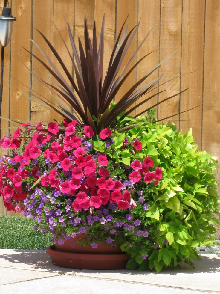 Charming Flower Pots For Around The Pool, Love The Sweet Potato!