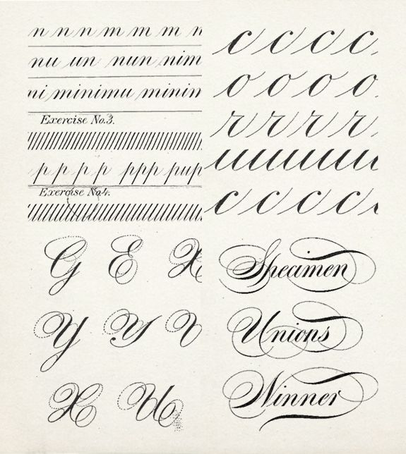 Calligraphy alphabet specimens