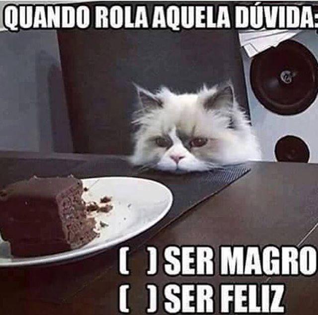 ALGUMAS DECISŌES DO DOMINDO! HEHE :) #petmeupet #domingo #gatos