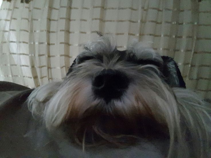 1000 Ideas About Tv Dog Beds On Pinterest Dog Beds Dog