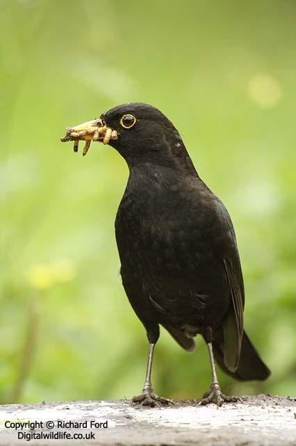 Great site, lots of info on feeding wild birds.