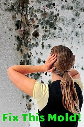 Top Home Inspection Issues - Mold in a home:  http://www.maxrealestateexposure.com/top-home-inspection-issues/