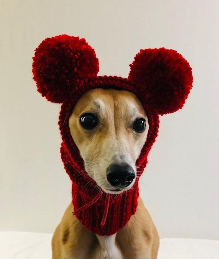 Dog Snood Knitting Pattern PDF Instant Download Knitted ...