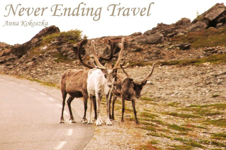 Attention! Reindeer on way!  Norway