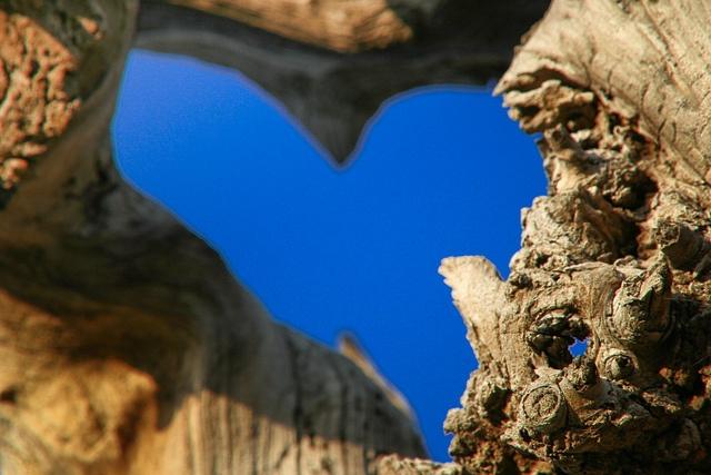 One Love! Photo taken at Stancija Baladur in Rakovci. Istria, Istra, Croatia, heart, tree