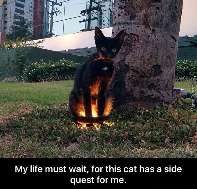 Image result for cat has a quest for me | Cats, Funny animals, Animals