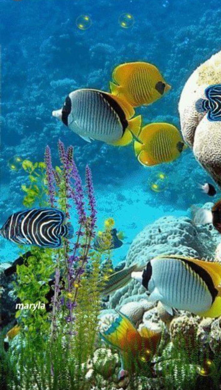 ими подводный мир гиф анимация чтобы