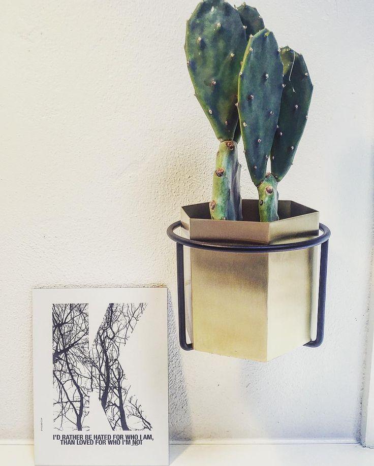 ferm LIVING Plant Holder and Hexagon pot in brass: http://www.fermliving.com/webshop/shop/green-living.aspx