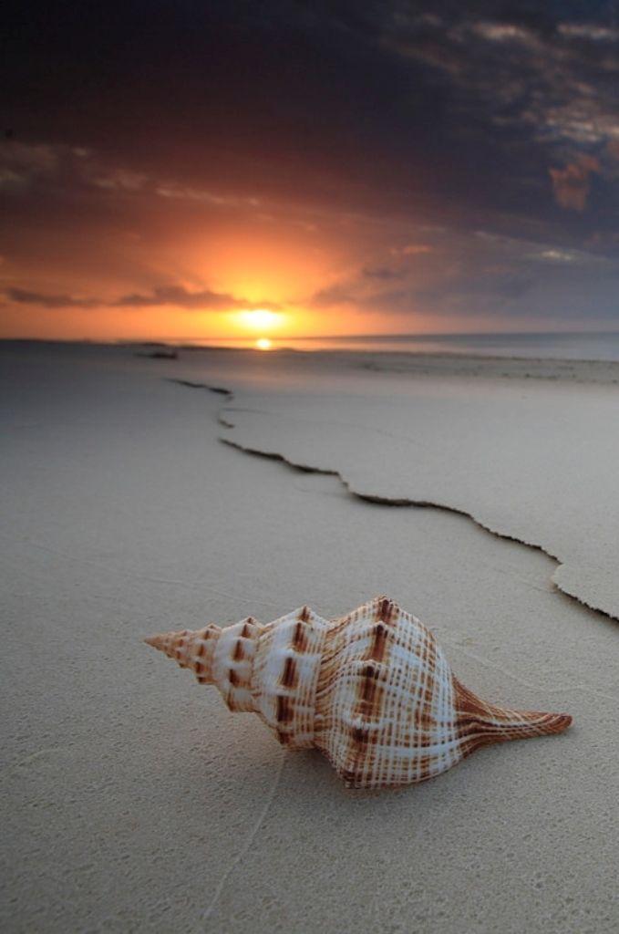 The Shell by Garry Schlatter