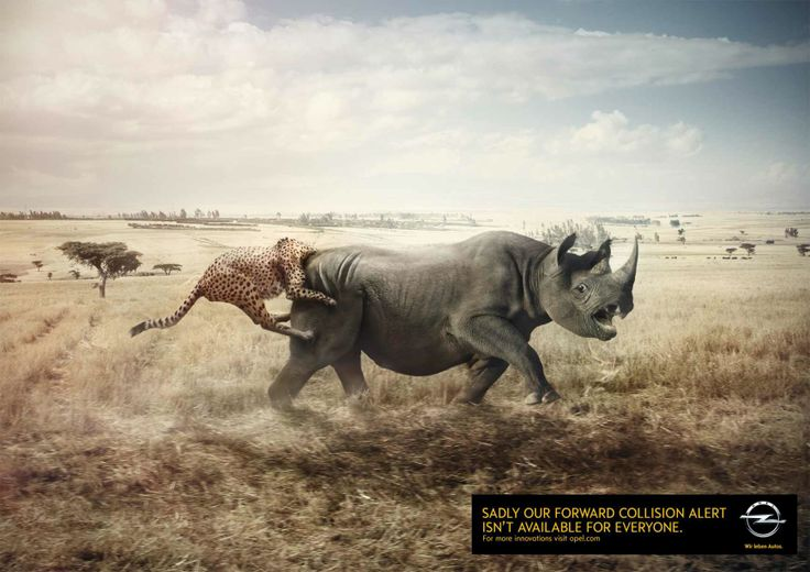 Opel: Rhino and leopard