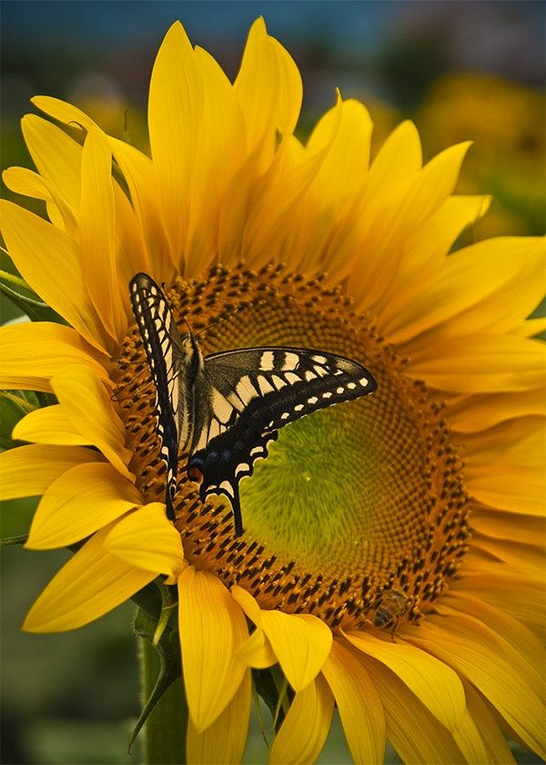 347 best images about sun loving flowers hi heat flowers flowers that love to hug the sun on - Flowers that love full sun and heat ...