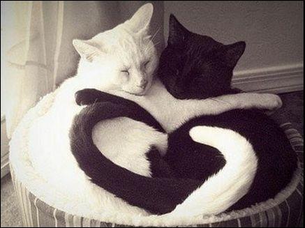 Black & White hug