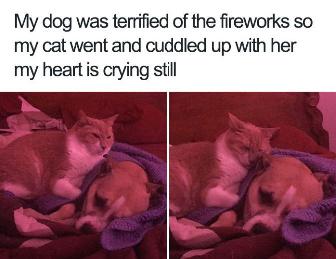 27 Ridiculously Happy Dog Memes to Brighten Your Day | BlazePress