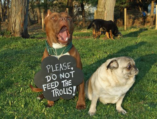 DON'T FEED THE TROLLS!: Dogs Deserve, Crazy Mean Bor People, Do You, Pitbull, Bull Education, Ems Bugs, Pit Bull, Pugs, Gardens Sheds